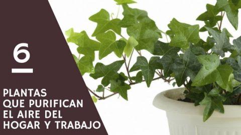 6 Plantas que purifican el aire del hogar y trabajo