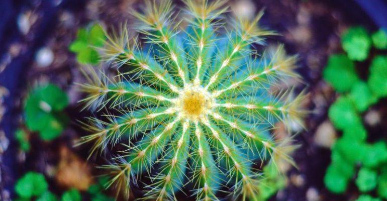 Cactus para tu hogar