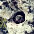 Conoce a las Abejas originarias de América: Las meliponas o abejas mayas